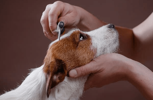 Finding the Right Pet Groomer in La Crosse
