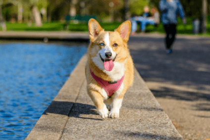 3 Fun Games to Play With Your Dog